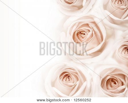Beautiful sepia roses border.