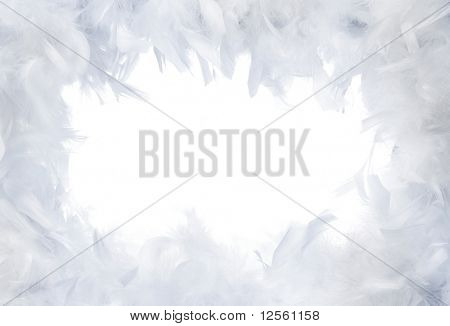 White Feathers Frame