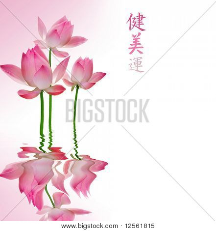 Beautiful Lotus with reflection