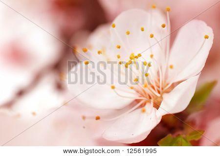 Spring Blossom.Selective Focus