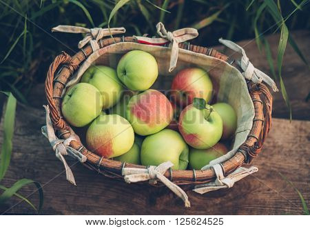 Apples in a wicker basket. Harvesting of juicy ripe apples in the autumn