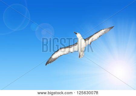 Wandering Albatross ( Diomedea exulans ) in flight  with sunny sky