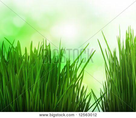 Frontera de hierba fresca