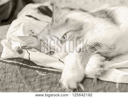 Nice adult cat in bliss in bed at black and white