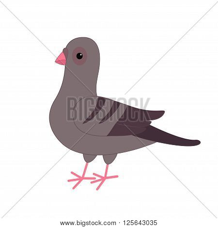 Gray Pigeon Dove bird. Cute cartoon character on white background. Isolated. Pigeon icon Flat design Vector illustration