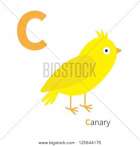 Letter C Canary bird Zoo alphabet. English abc with animals Education cards for kids Isolated White background Flat design Vector illustration