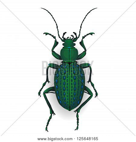 Colorful Vector Drawing Of Ground Beetle.