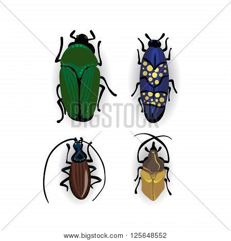 Colorful Vector Drawing Of Small Beetles.