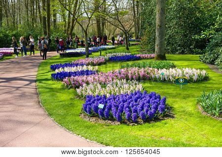 LISSE THE NETHERLANDS APRIL 11 2016: Tourists are visiting 'the Keukenhof'in the spring. The Keukenhof is a popular flower garden which is visited by a million tourists from all around the world. It is open for only six weeks every year.
