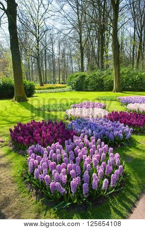 Tourists are visiting 'the Keukenhof'in the spring. The Keukenhof is a popular flower garden which is visited by a million tourists from all around the world. It is open for only six weeks every year.