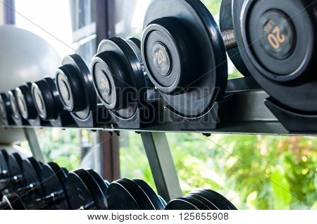 Line of dumbells in a gym with green view outside