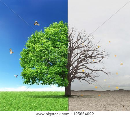 The concept of life and death. Dead and live tree at different backgrounds