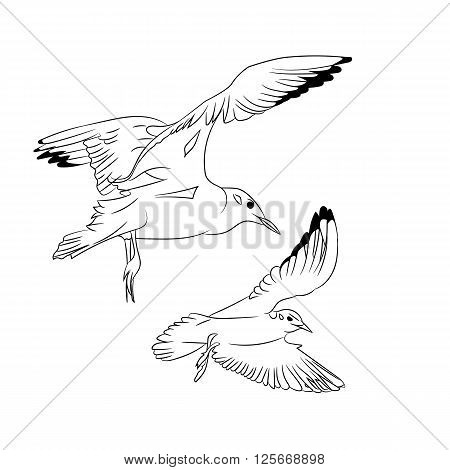 Black and White Cartoon Vector Illustration of flying Seagulls for Coloring Book