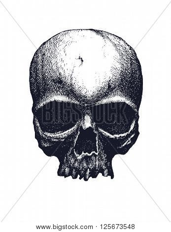 Black and white human skull. Hand drawn vector illustration