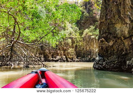 Canoe paddle through a mangrove forrest and the cave in Phang nga bay Thailand