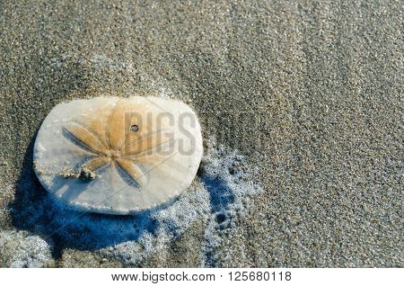 Close-up Of A Sand Dollar On The Beach