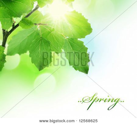 Spring Green fresh Leaves border