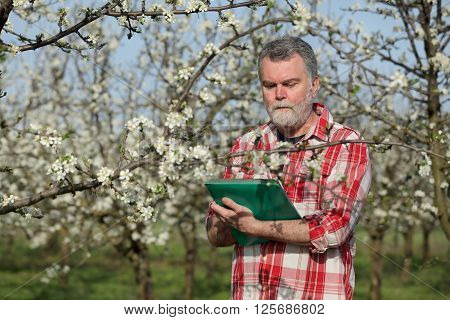 Agronomist or farmer examine blooming plum trees in orchard and writing data