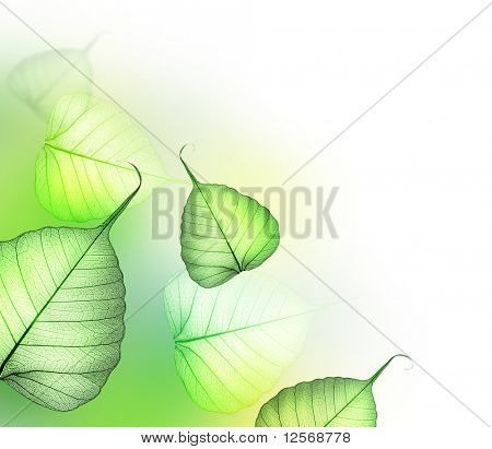 Beautiful Floral Design-green Leaves