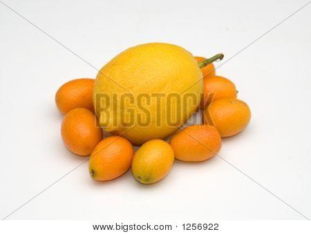 Zitrone und kumquats