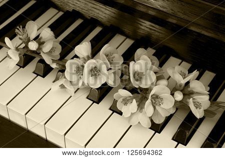 Black and White quince tree on piano - condolence card