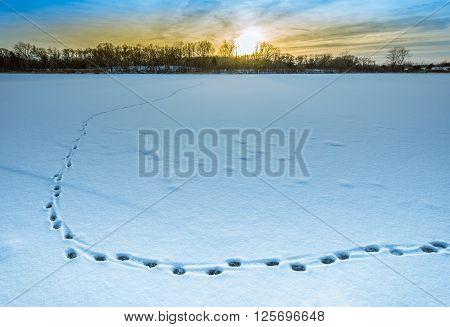 Meandering Tracks