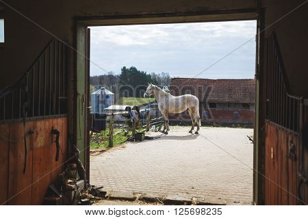 Tethered horse near the stable view through the door