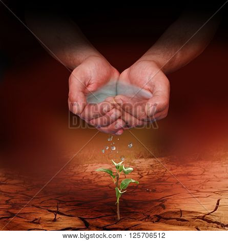 Hands watering a young plant growing trough dead ground