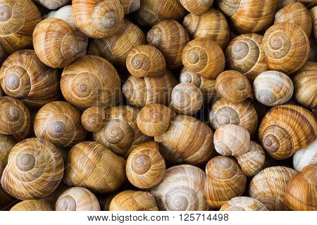 Many colorful snail shells on nature background