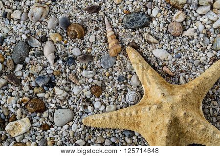 Yellow starfish on gravel with colorful stones and shells on the beach, nature background