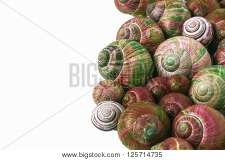 Many colorful snail shells with white background