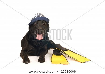 Black Labrador Retreiver Portrait