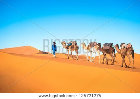 Camel caravan on the Sahara desert, Morocco