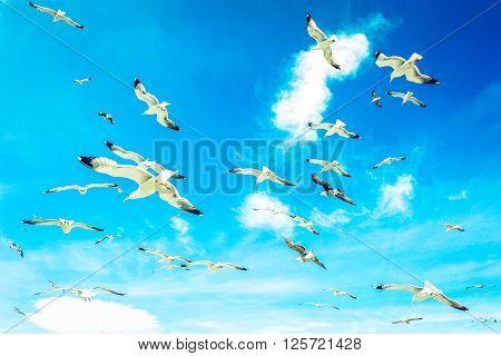 Huge swarm of sea gulls. Wildlife concept