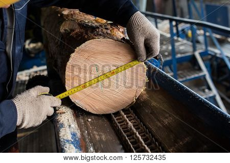 worker measures the diameter of the log