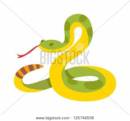 Gold python reticulated albino boa constrictor wildlife nature snake vector illustration. Boa snake wildlife nature animal and exotic boa gold snake. Boa attack crawling predator danger snake.