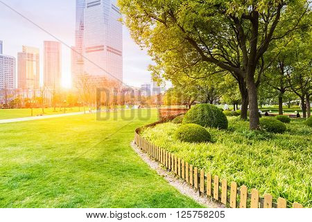 city park in shanghai lujiazui central greenland in sunlit meadows.