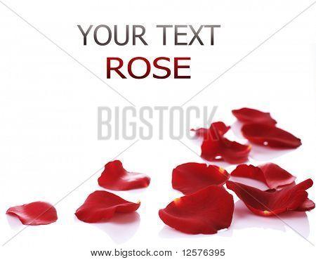 Rose Petals Border