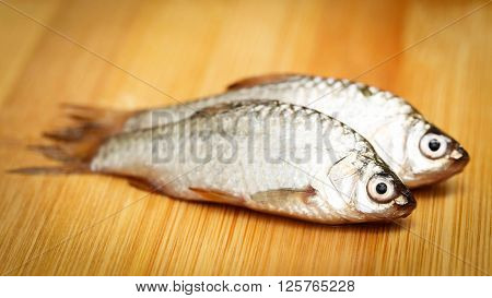 Swamp Barb of Indian subcontinent on wooden surface