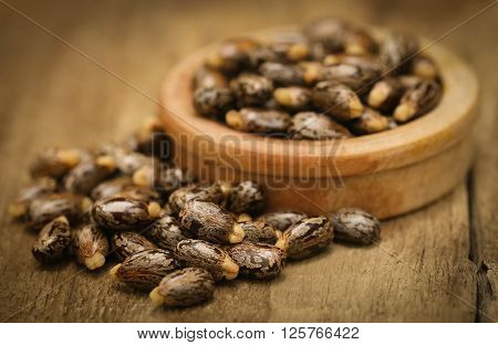 Close up of soem dry castor beans