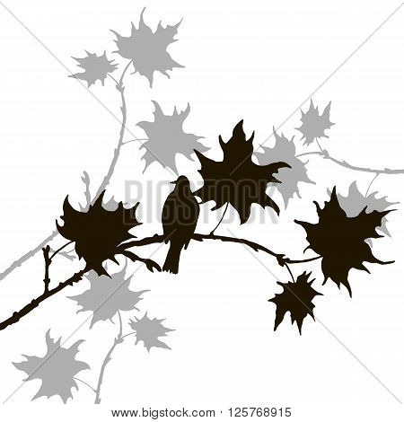 vector silhouette of bird at tree, hand drawn songbird at branch of maple tree, vector illustration