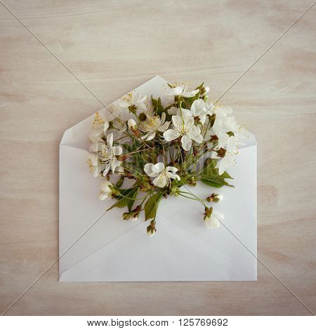 Blooming cherry. Envelope with spring flowers over rough obsolete wooden background. Springtime design concept