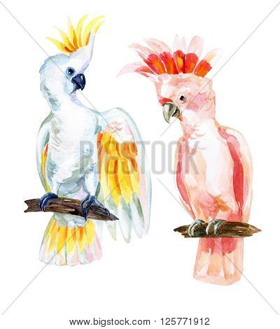 watercolor Australian Cockatoo set hand painted illustration of parrots