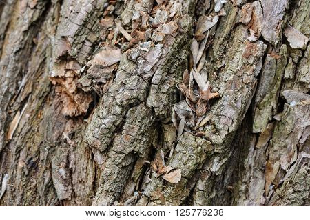 Detailed tree bark macro background, selective focus