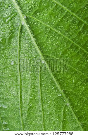 Macro of a leaf covered in water droplets .
