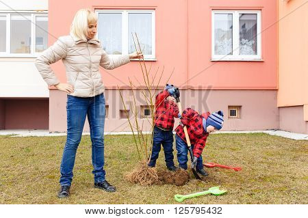 Mother and two sons thrown tree in the yard