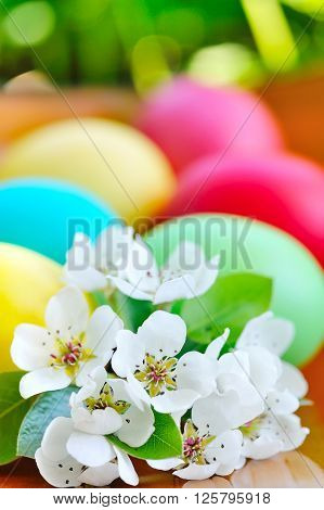 Colored easter eggs with white flowers. Close-up