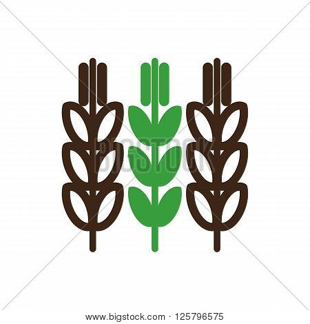 Spikelets of wheat icon outline. Field. Farm. Vector illustration eps 10