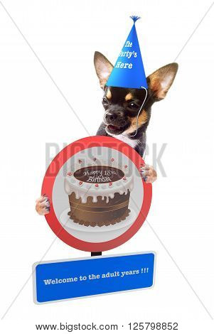Cute Chihuahua dog wish happy birthday, isolated on white background
