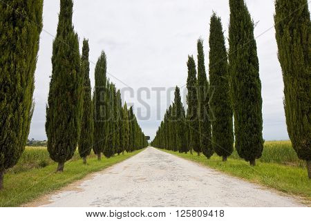 Country Tuscany road with cypress trees (Italy)